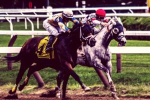 Jockey Stocks